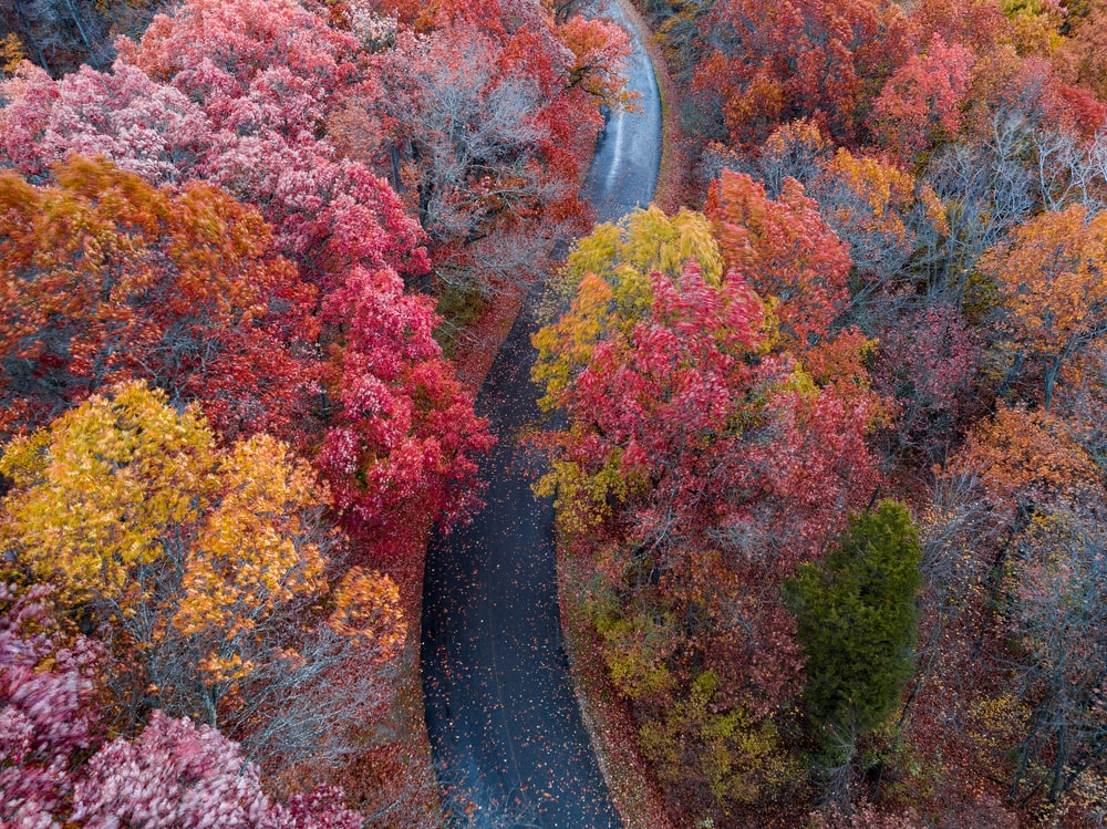 aerial photography of black road surrounded with yellow and red trees