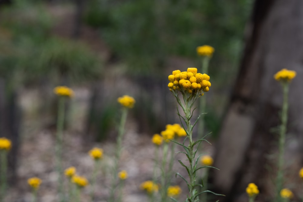 shallow focus photography of green-leafed plant with yellow flowers