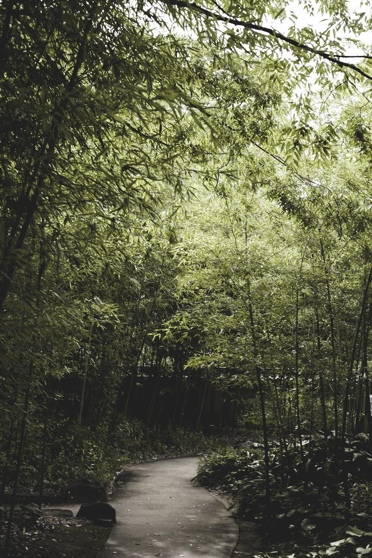 low-light photo of way in between of trees