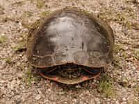 turtling turtle stories