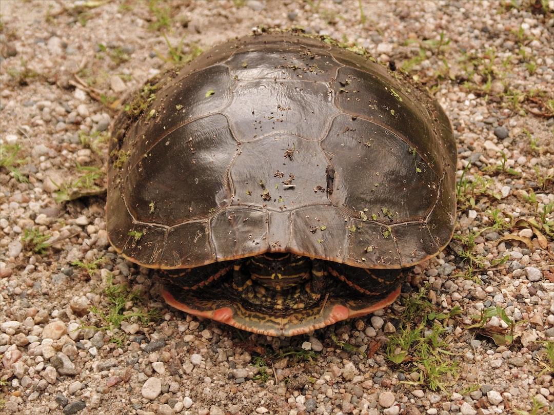 Encountering a shy turtle.