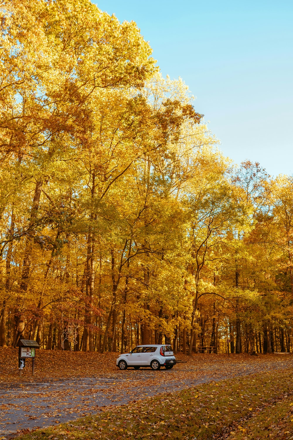car parked under the trees