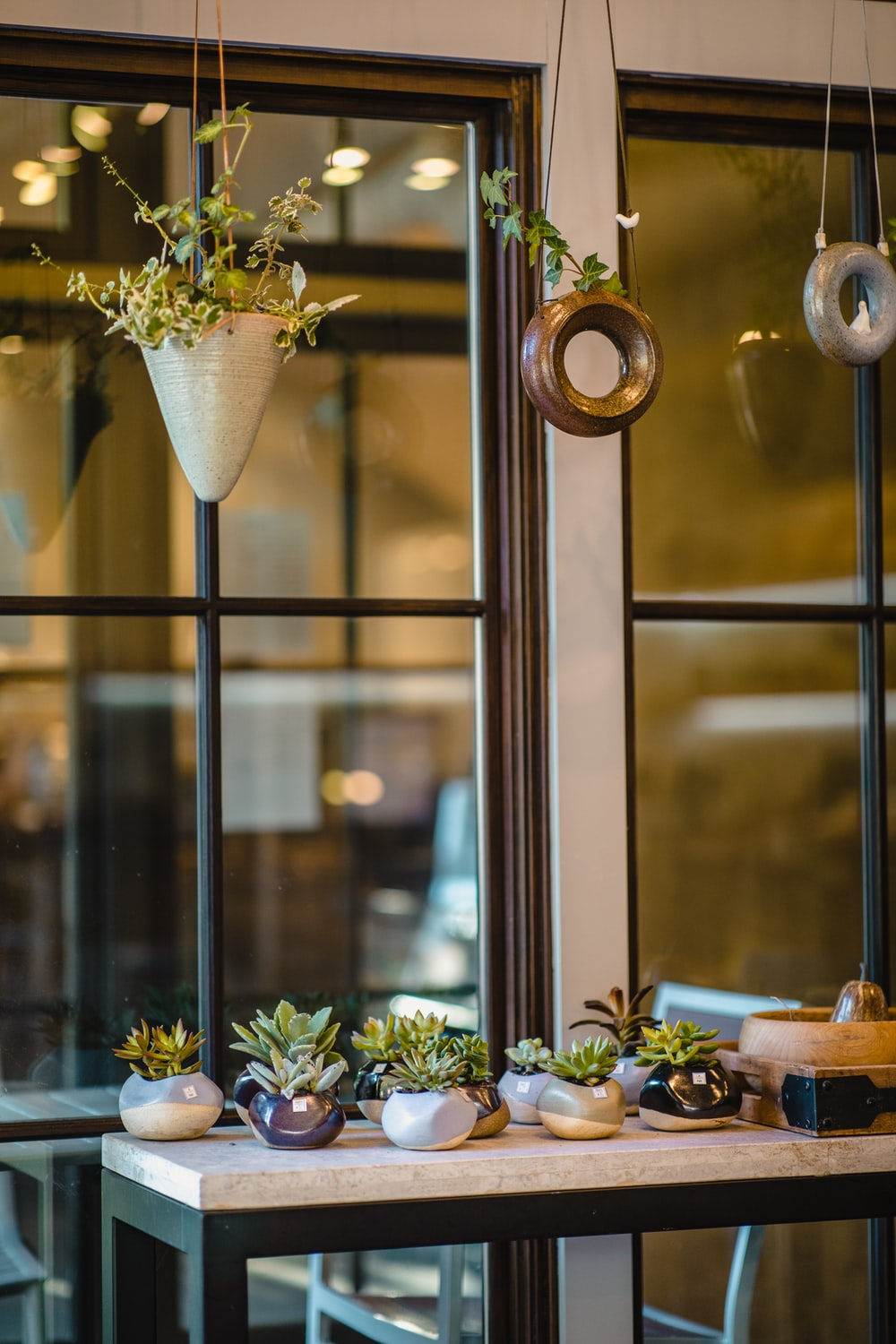 hanging plants over table with succulents plants