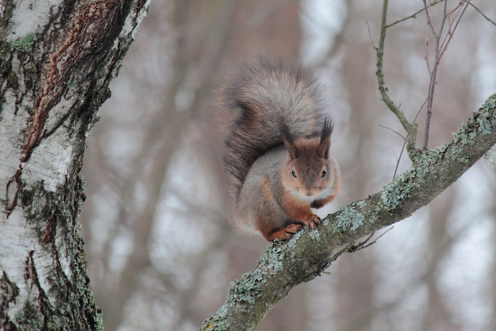 shallow focus photography of brown and gray squirrel