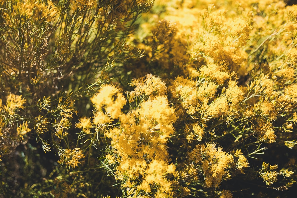 green-leafed plant with yellow flowers