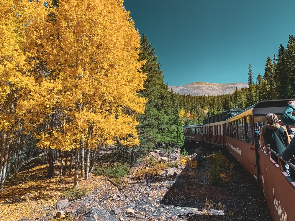 people riding train passing green and brown trees