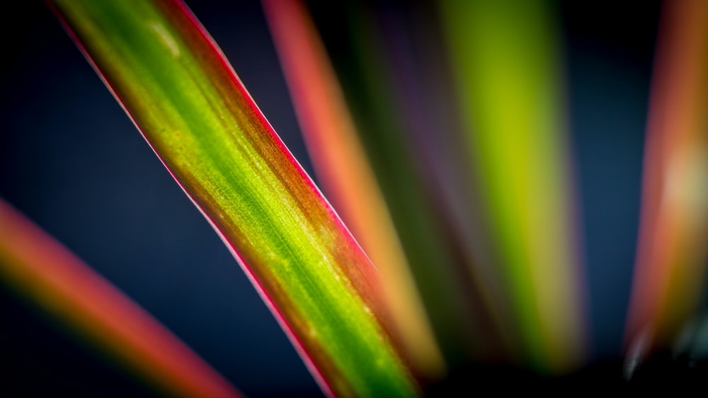 selective focus photography of green and red plant