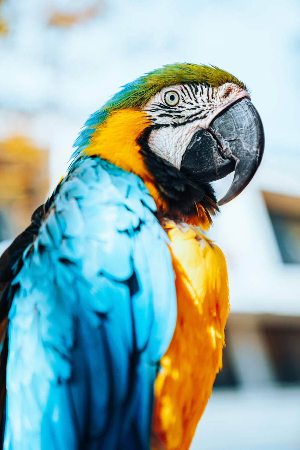 yellow and blue macaw bird
