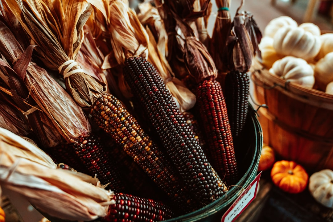 Decorative and ornamental Indian corn in a wooden basket.