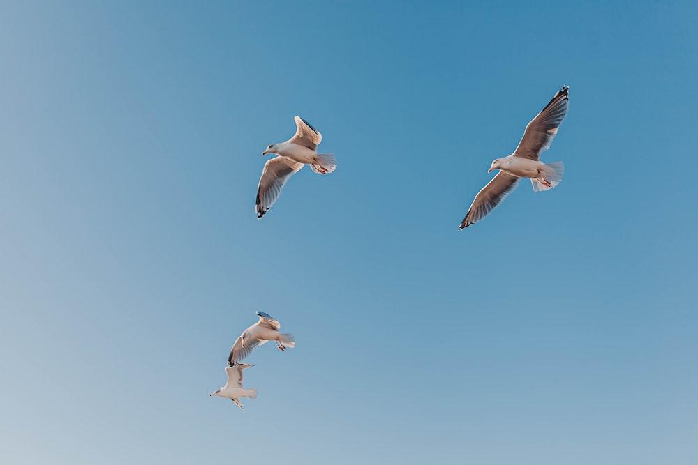 photo of four Seagull birds midair