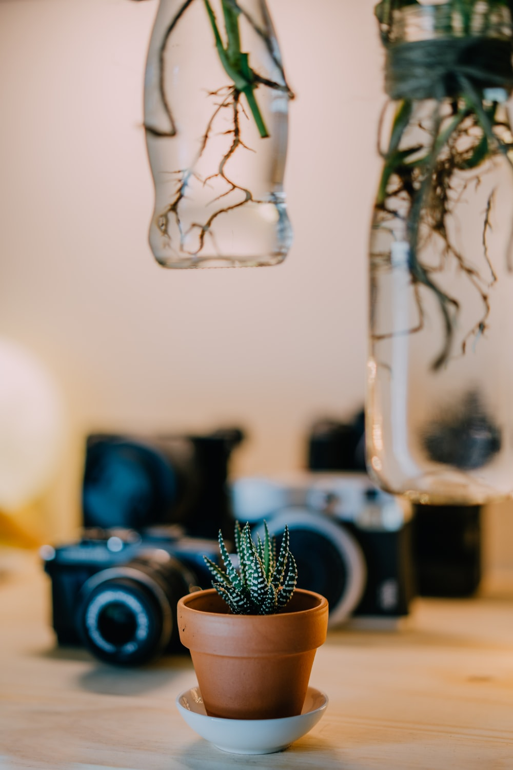 selective focus photography of green plant beside cameras