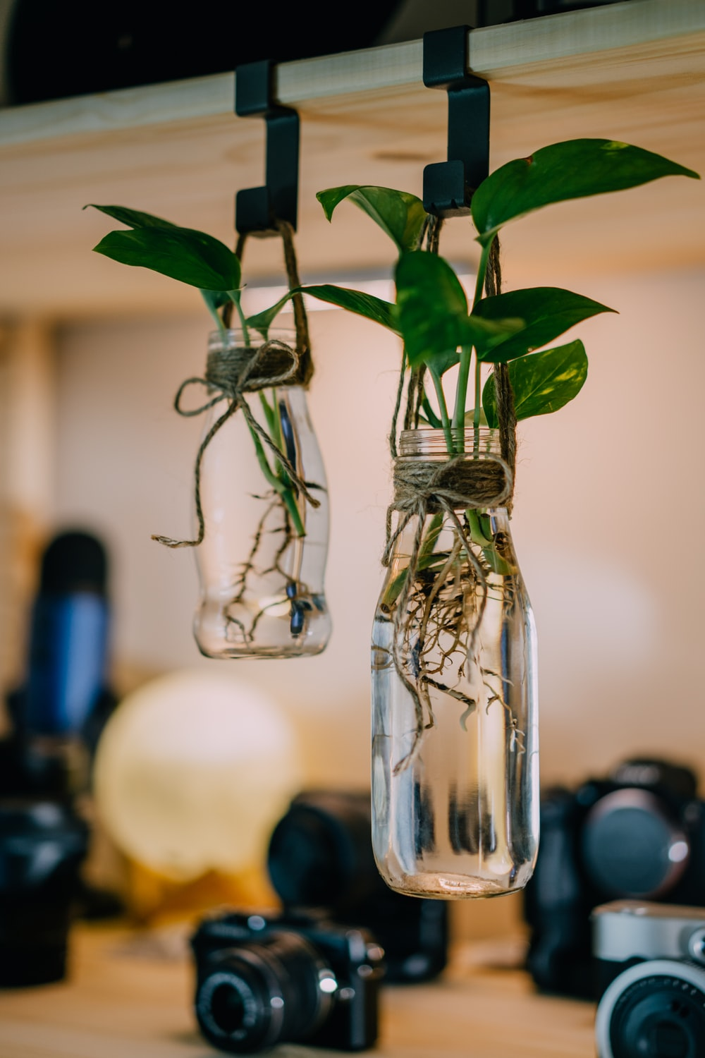two hanging glass jars with plants