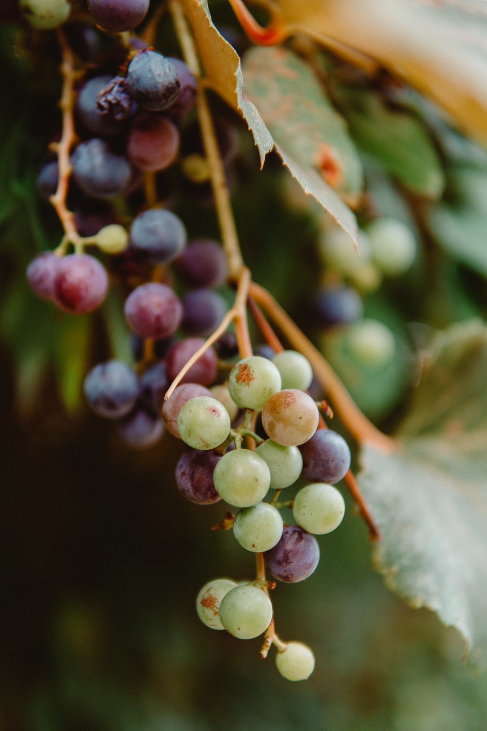selective focus photography of green and red grapes