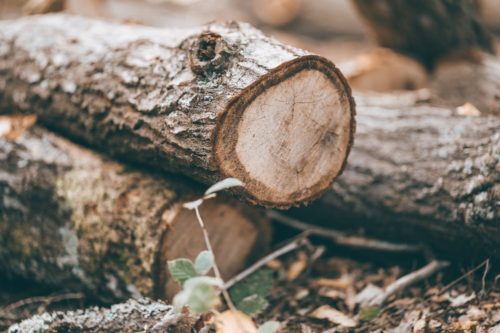 shallow focus photography of tree logs