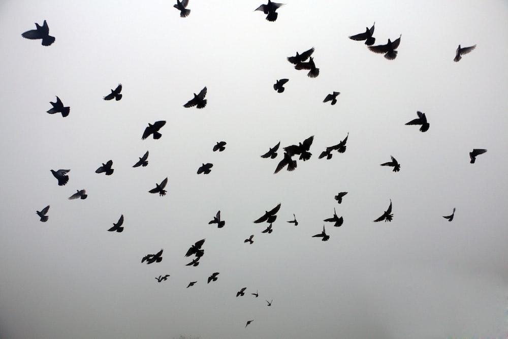 silhouette of birds on sky