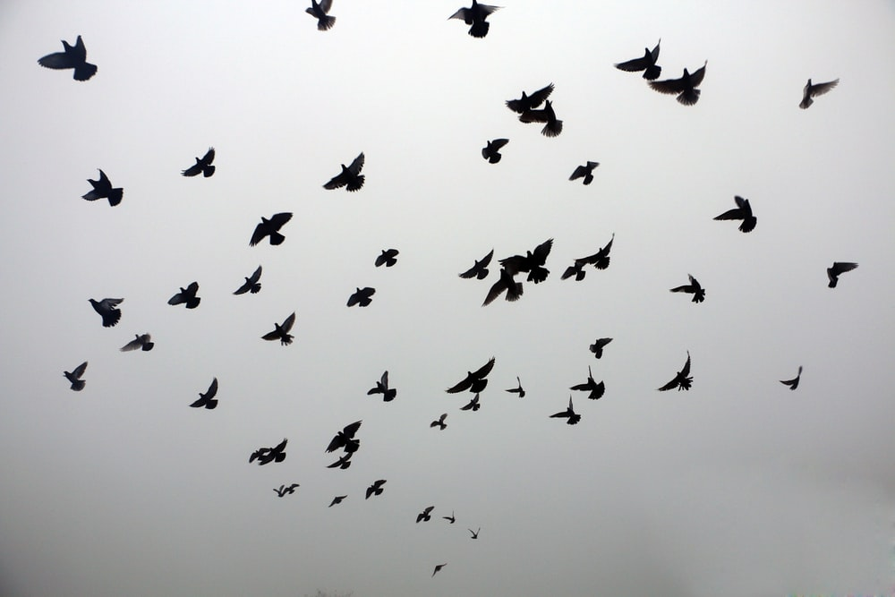silhouette of birds on sky