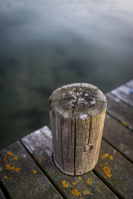 brown wooden log during daytime