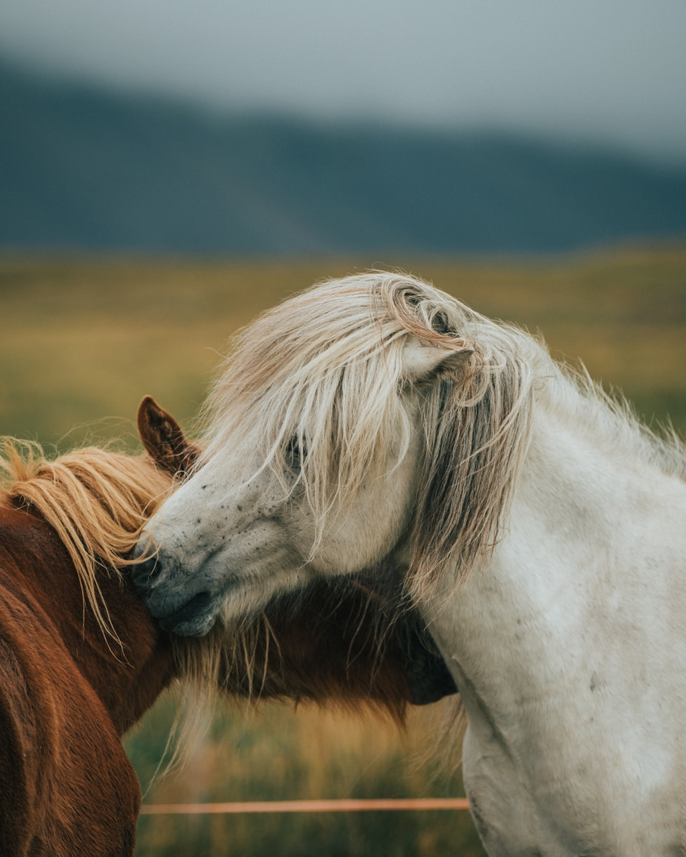 white and brown horse during daytime