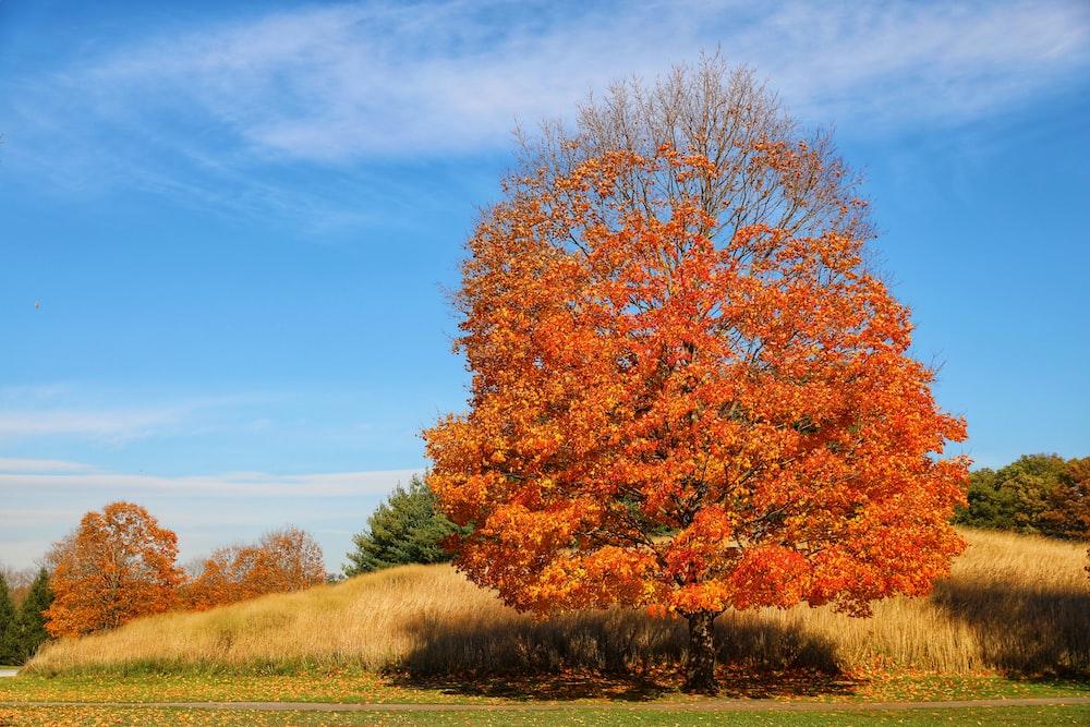 brown leaf tree under clear blue sky during daytime