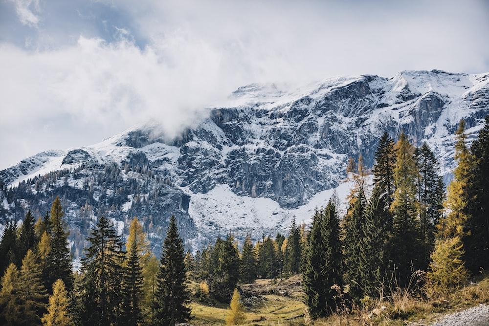 mountain ranges near trees