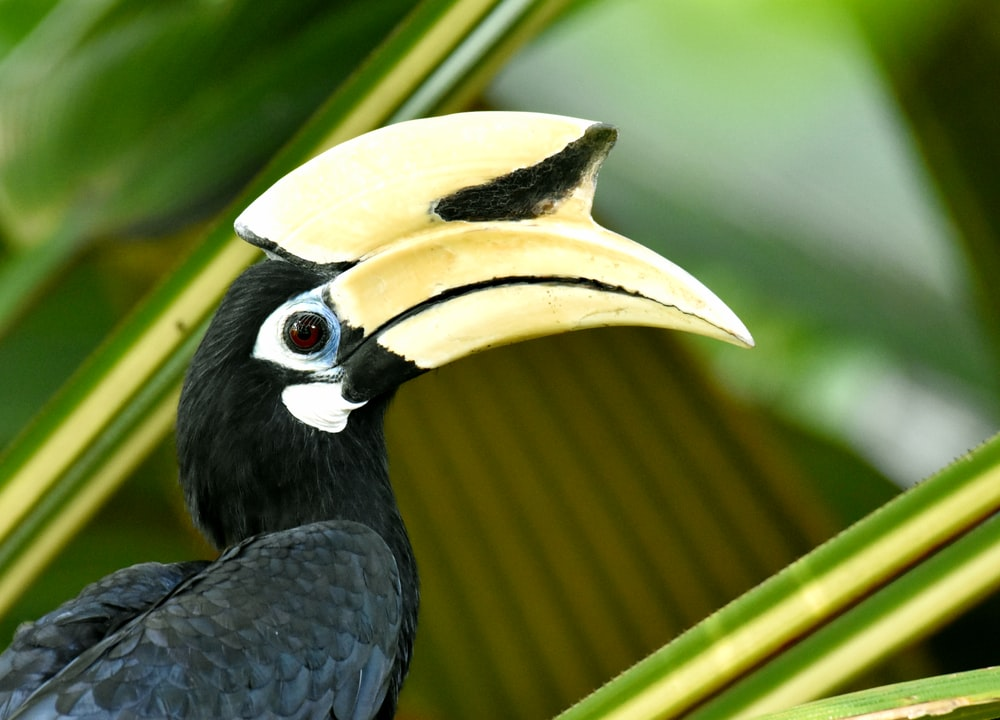 black and yellow toucan photograph