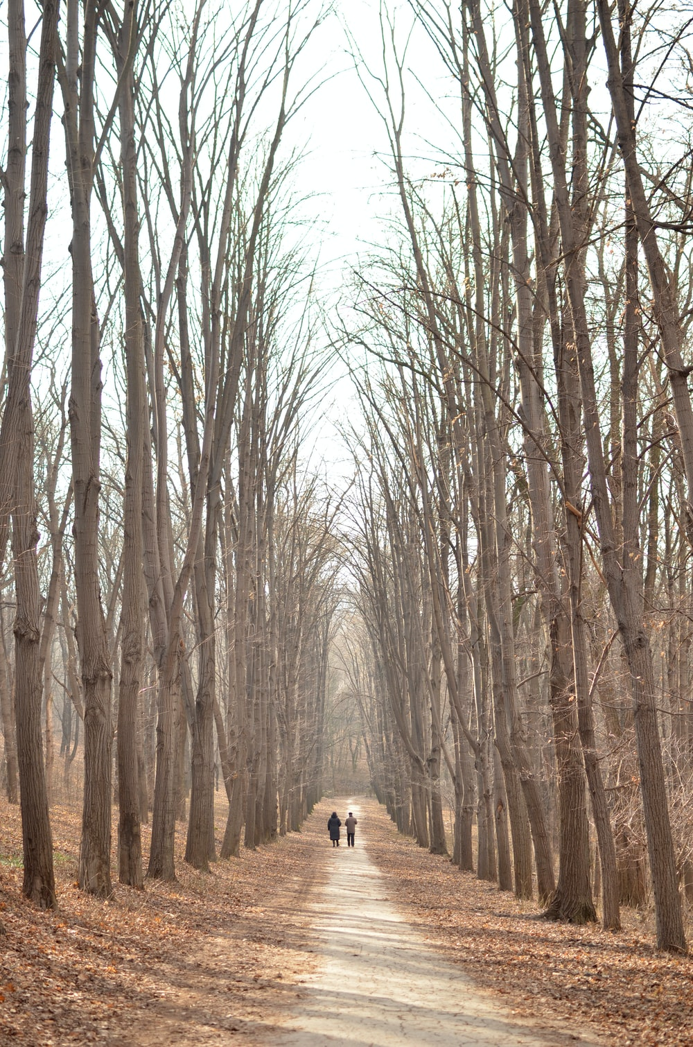 two people walking on road between bare trees during daytime