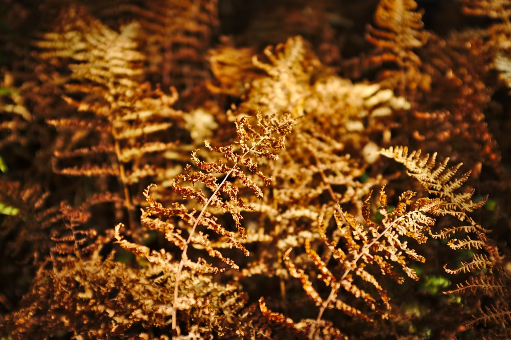 shallow focus photography of brown leaves