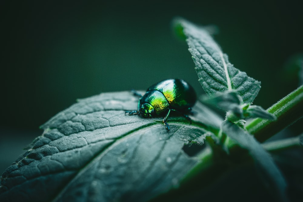 shallow focus photography of green beetle on leaf
