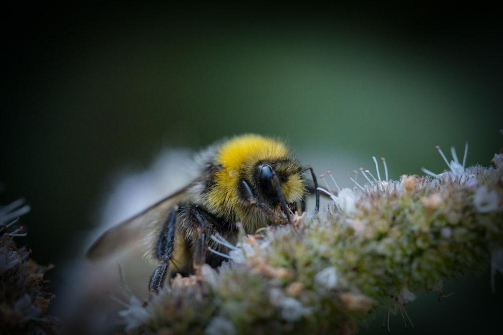 yellow and black wasp