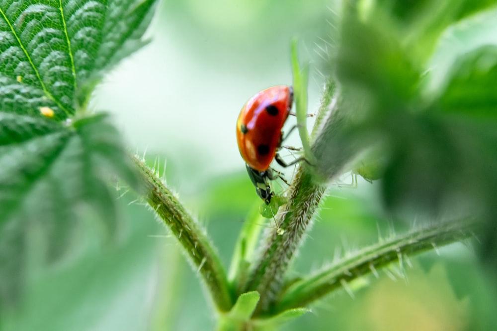 red and black ladybug on plant