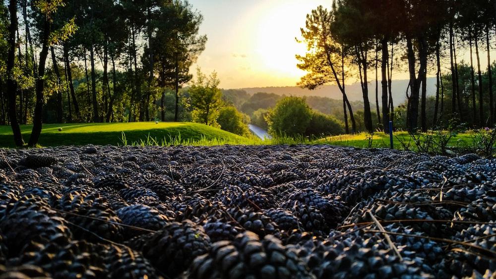 brown berries on field