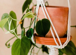 green leafed hanging plant