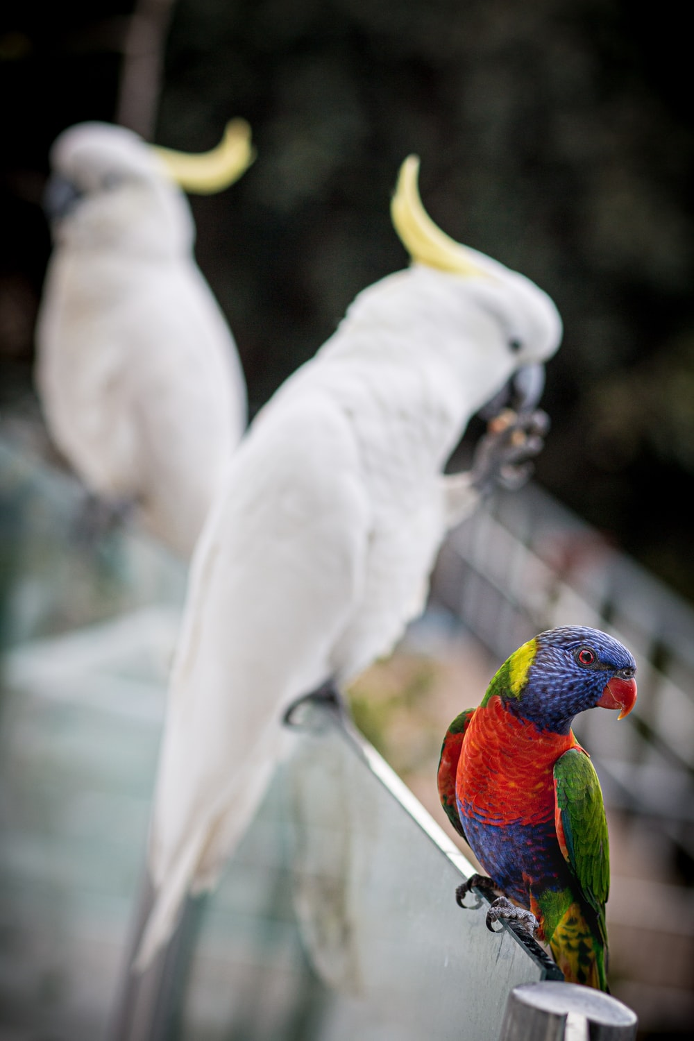 two white and yellow birds photograph