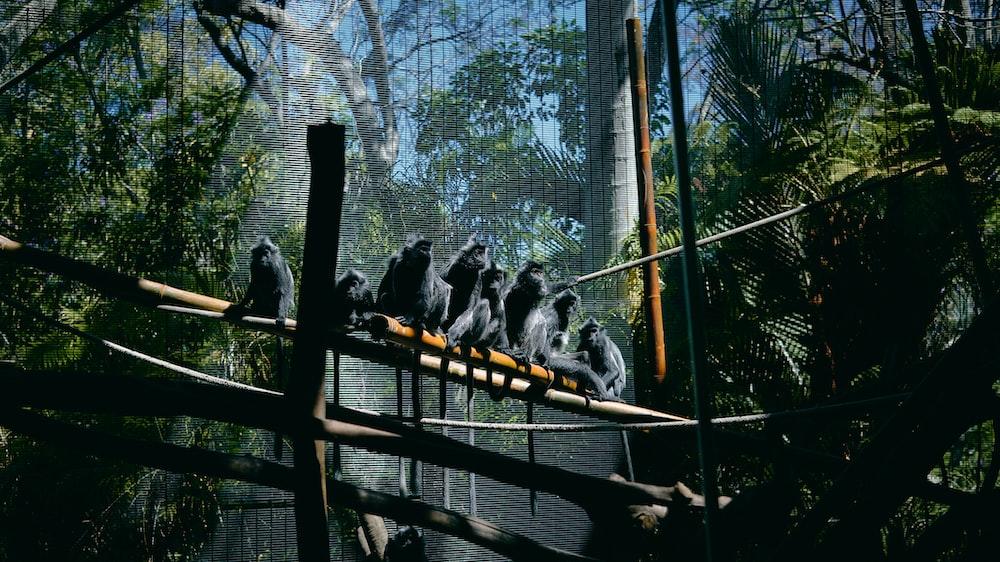monkeys sitting on bridge