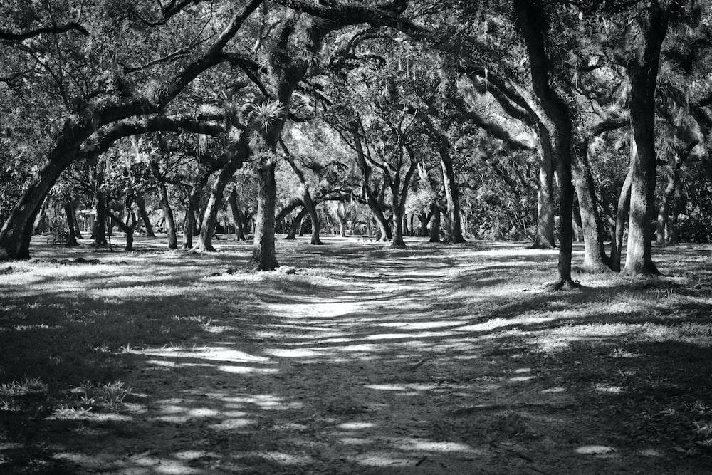 trees field