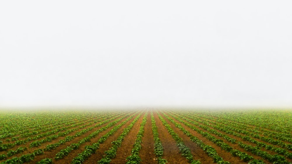 photography of green-leafed plants field during daytime