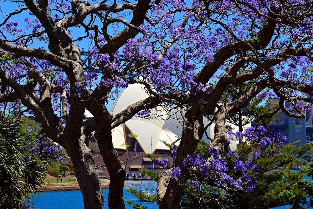 purple flowering tree during daytime