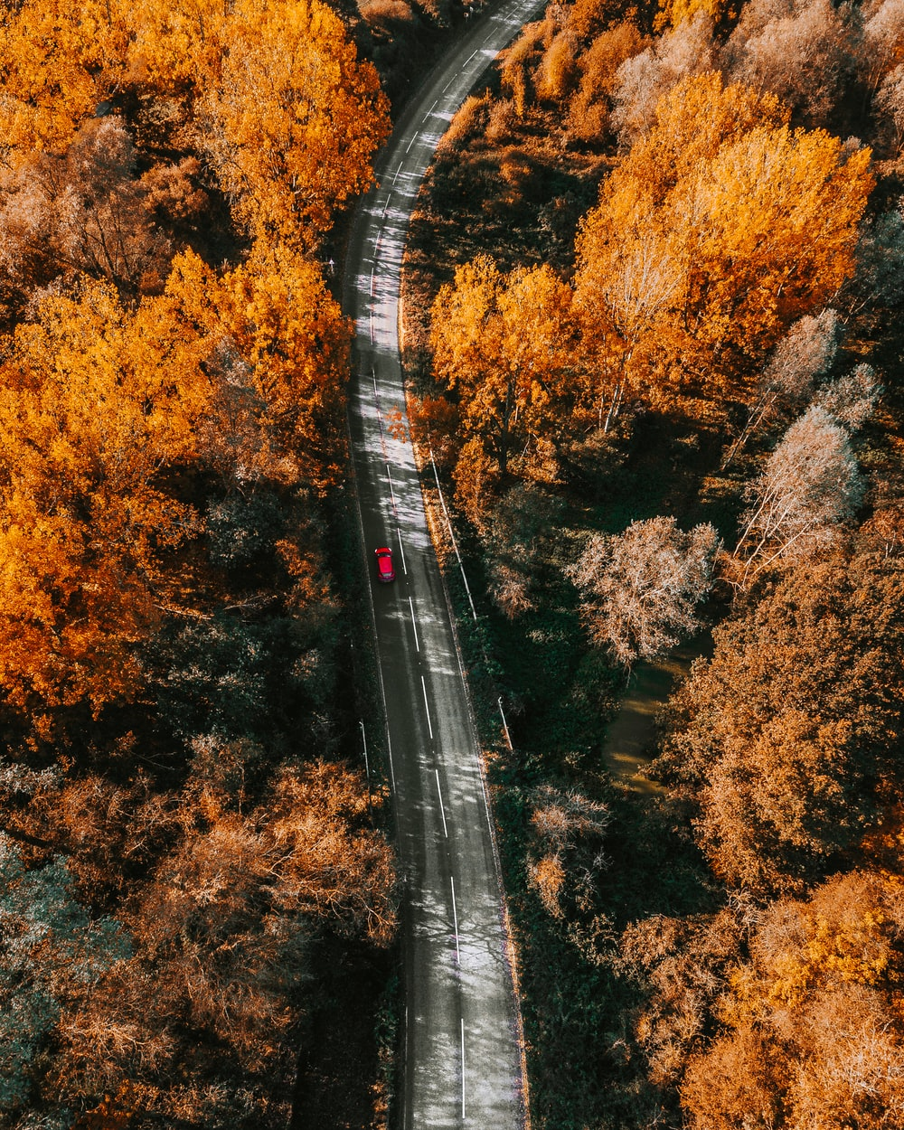aerial photography of red vehicle on road surrounded with tall and orange trees during daytime