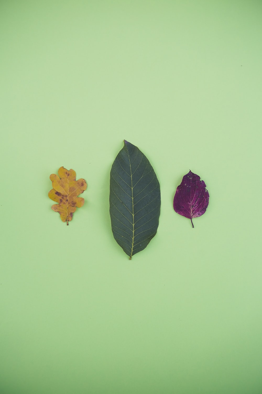 three assorted-color leaves