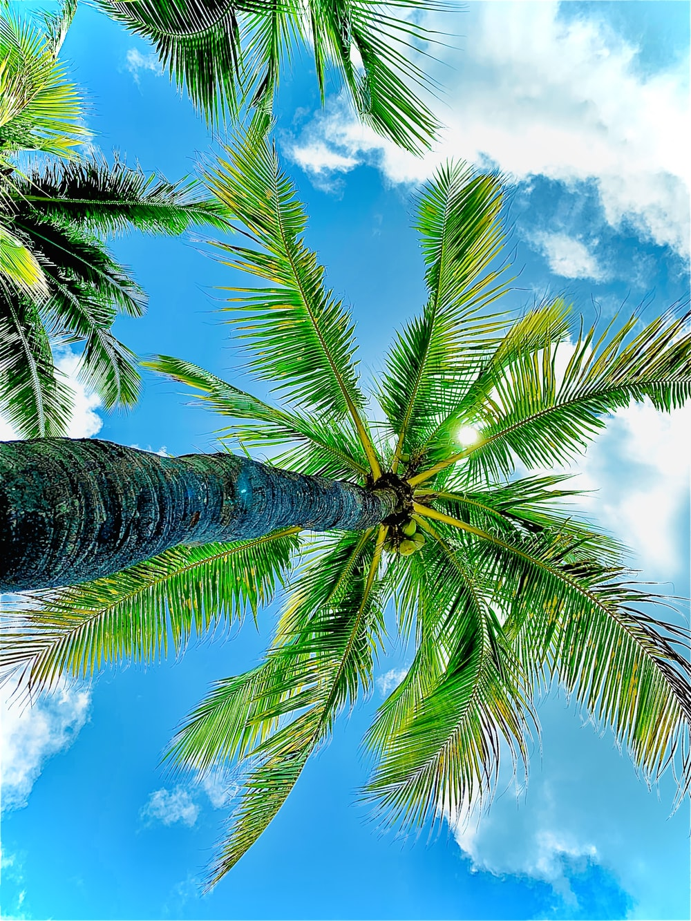 low-angle photography of green coconut trees under blue and white sky during daytime
