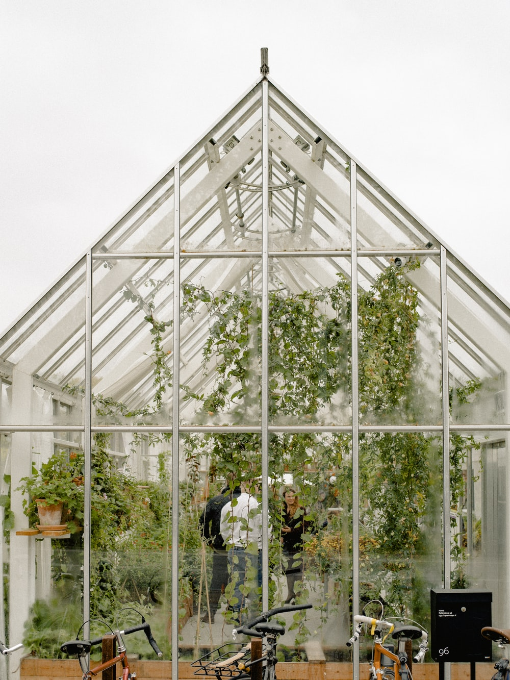 people inside greenhouse