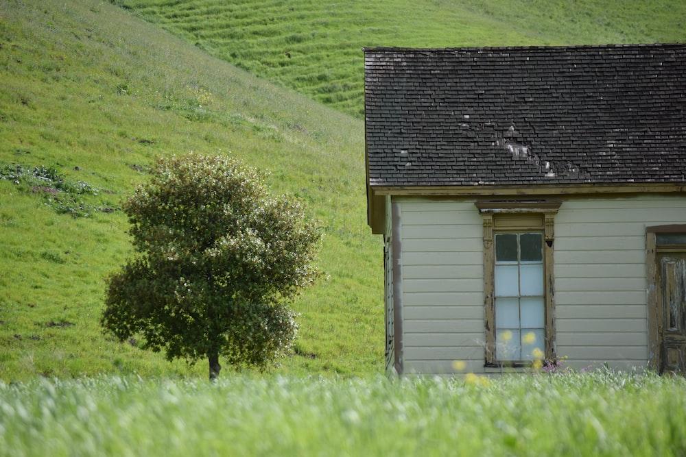 brown house beside tree