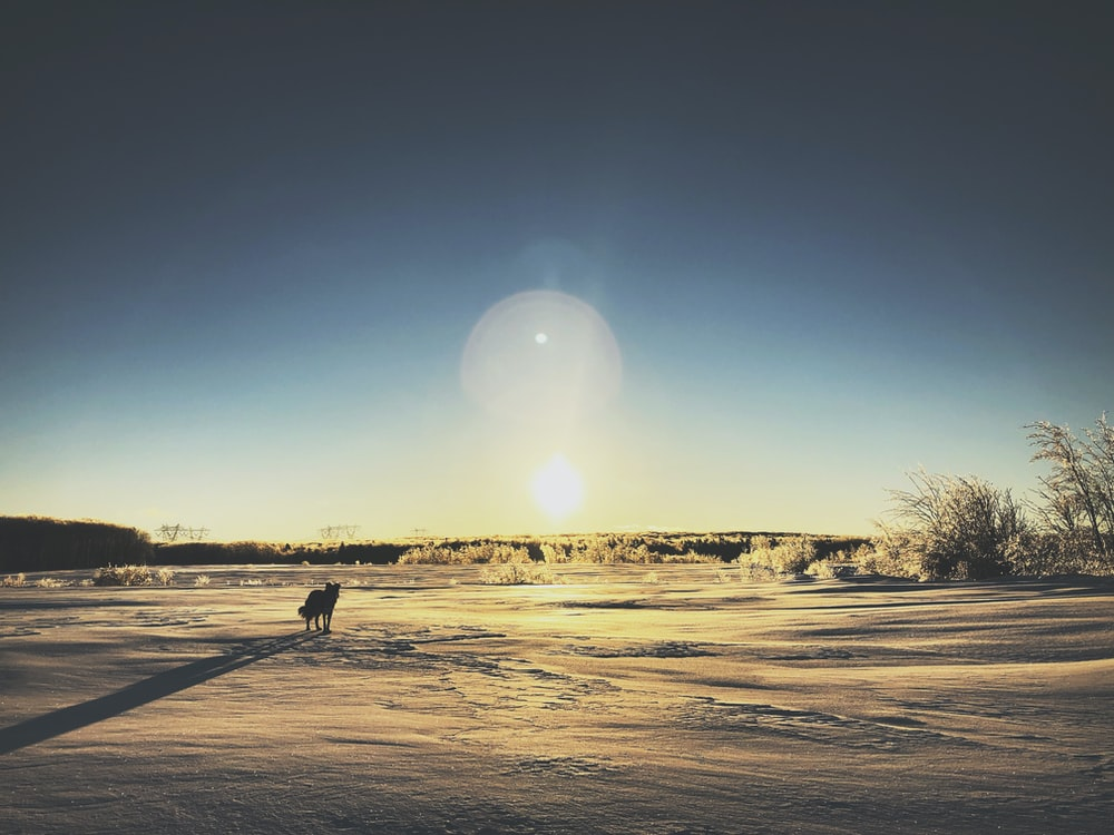 silhouette of dog during daytime