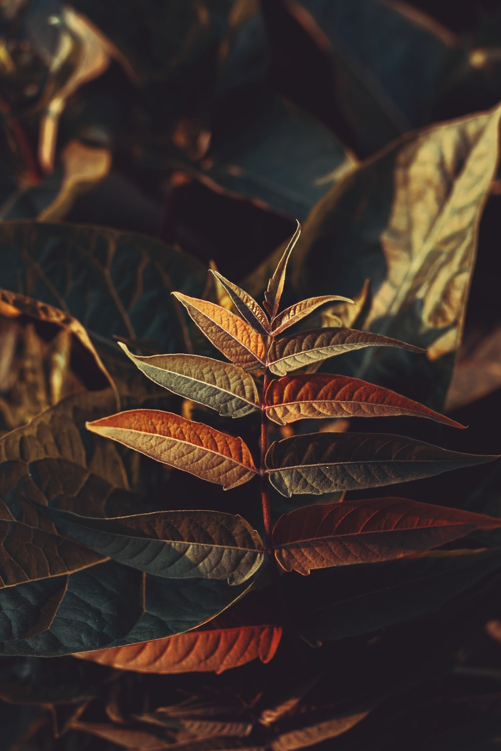 selective focus photography of brown and green plants