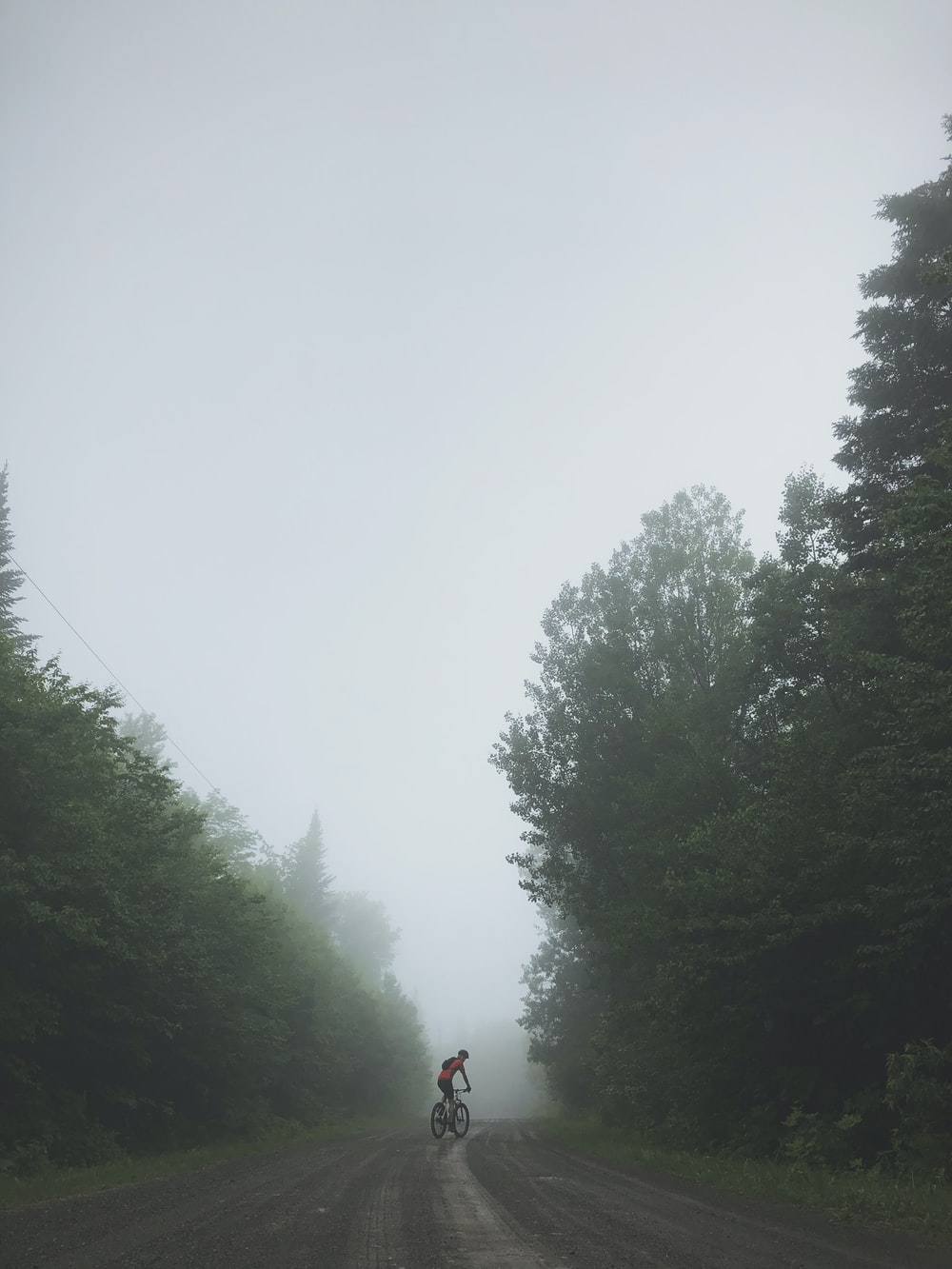 person biking on road surrounded with tall and green trees during foggy day