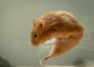 selective focus photography of brown mouse in container