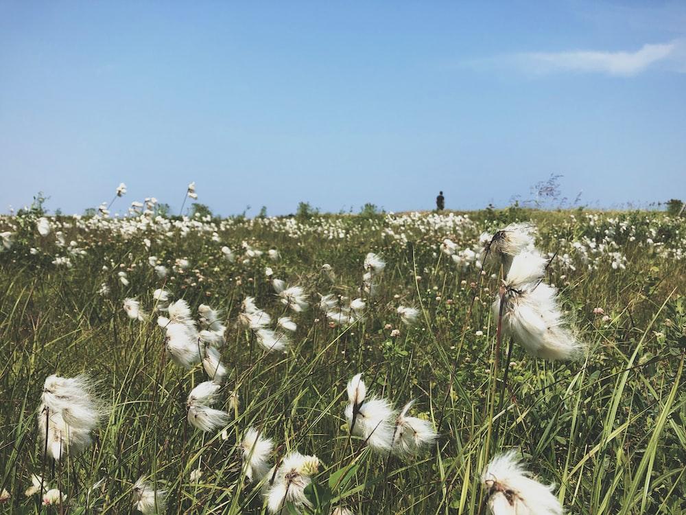 white petaled flower field during daytime