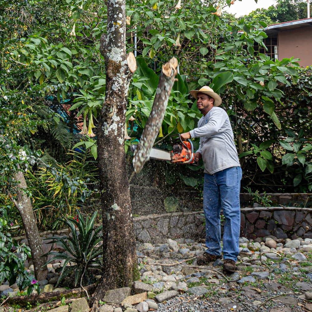 man wearing brown hat cutting tree branch using red chainsaw during daytime