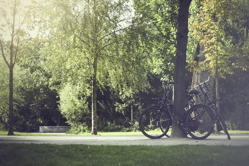 two cruiser bikes parked beside tree
