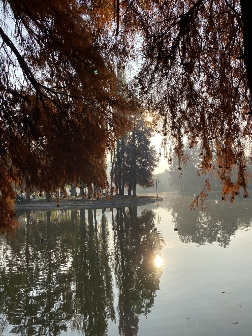 trees beside calm body of water